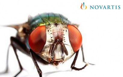 insectos-en-granjas-409x258.jpg