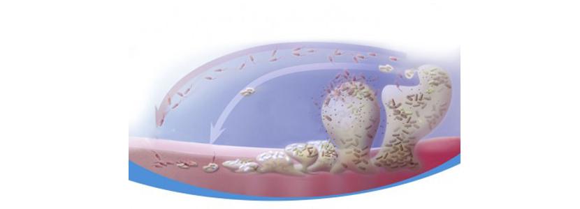 Biofil-bioplagen.png