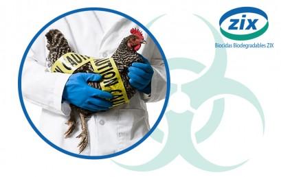 bioseguridad-ponedoras-409x258.jpg