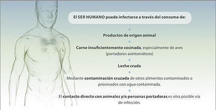 medio02-humano