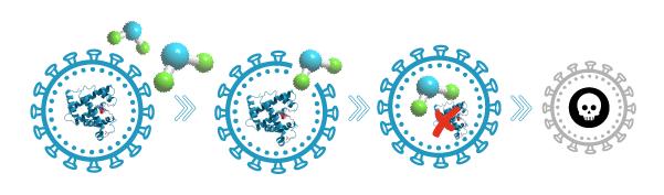 inhibicion sintesis proteica