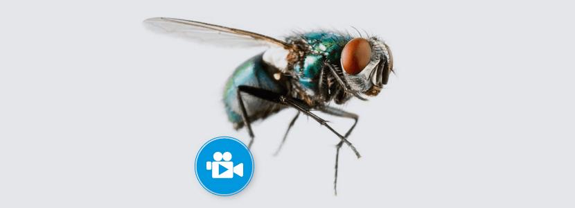 Bioplagen-moscas.png