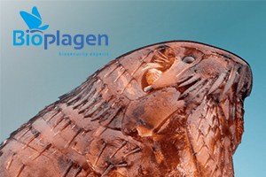 Pulgas-bioplagen.png
