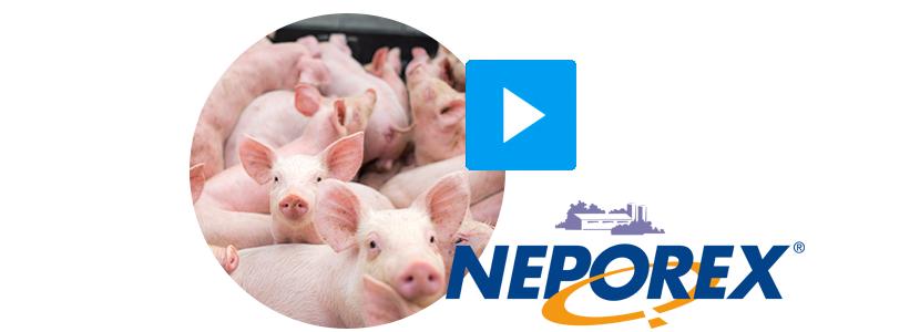 Neporex-porcino.png