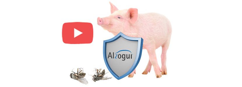 Video-algozur.png
