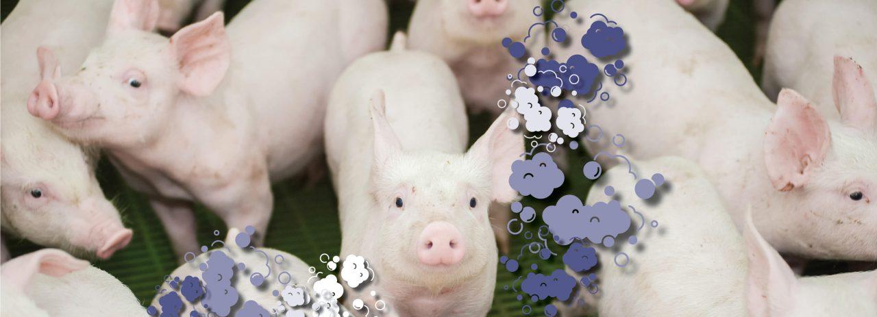 Zotal-Bioseguridad-granjas-porcinas-1280x463.jpg