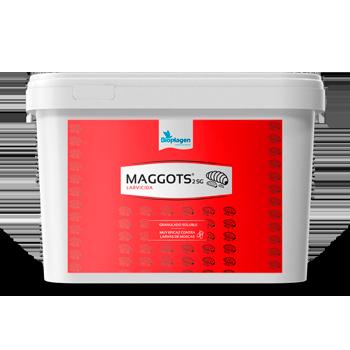 MAGGOTS.png